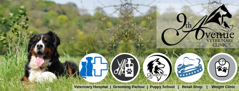 Veterinary Clinic Banner
